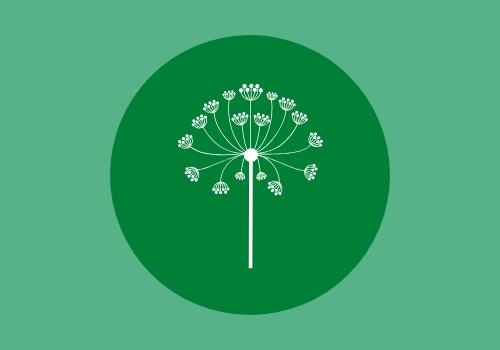 Understanding The Power Of Dandelion Tea