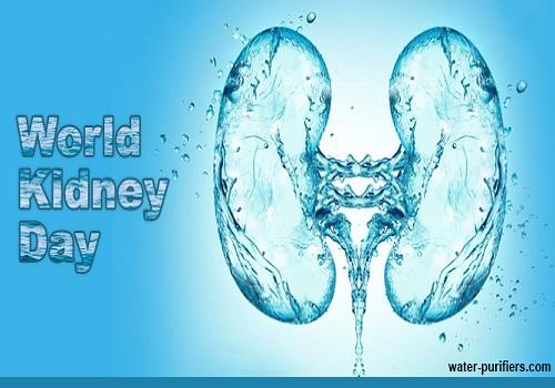 5 Foods To Keep Kidneys Healthy
